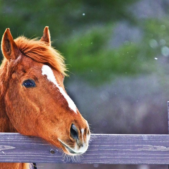 Love to show horses?<br />